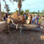 Экскурсия на крокодиловую ферму на Джербе. Тунис