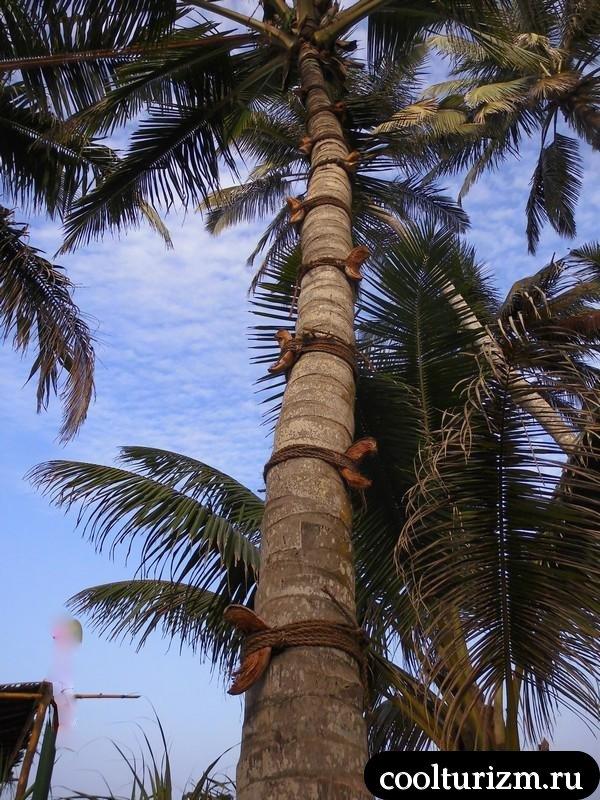 алкаши на Шри Ланке