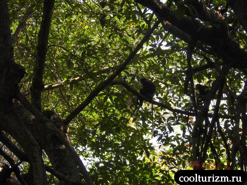 мартышки в Шри Ланке