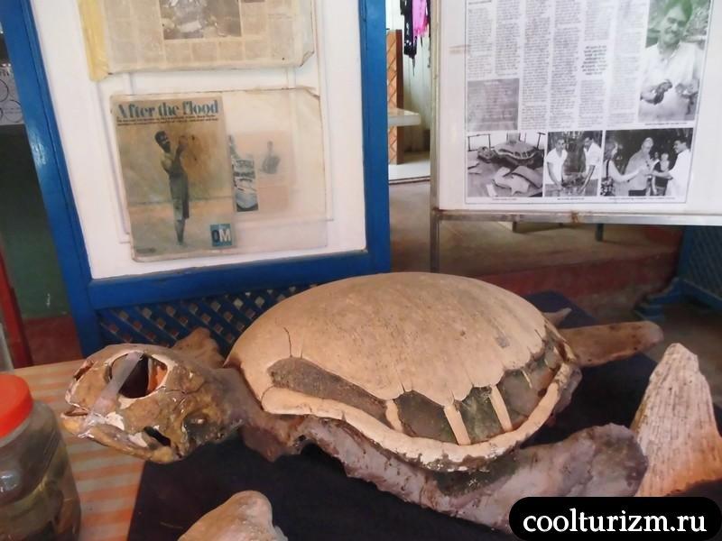 черепаха.панцирь.Шри Ланка