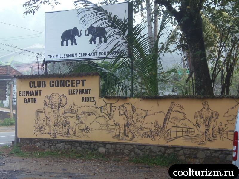 слоновий питомник.Шри Ланка