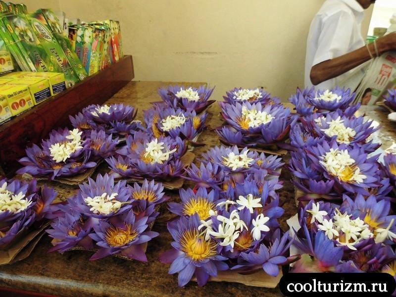 лотосы вонючки.Шри Ланка