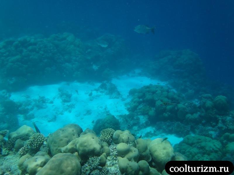 male-ryba-pod-vodoi