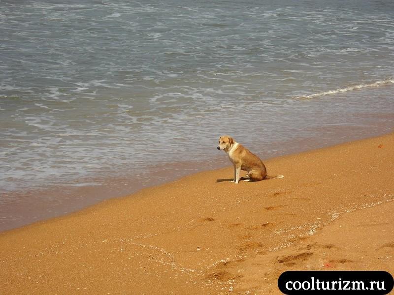 Индийский океан и собака