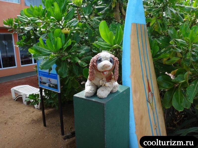собачка в Шри Ланке