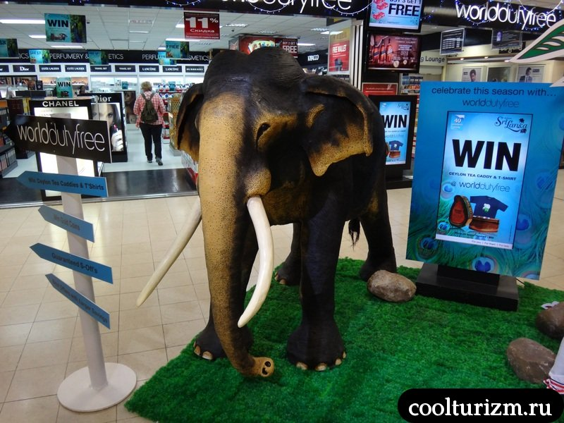 коломбо.аэропорт.слон