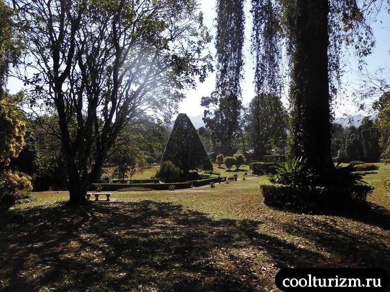 ботанический сад в Шри Ланке