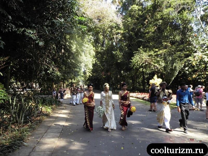 свадьба в ботаническом саду.Шри Ланка