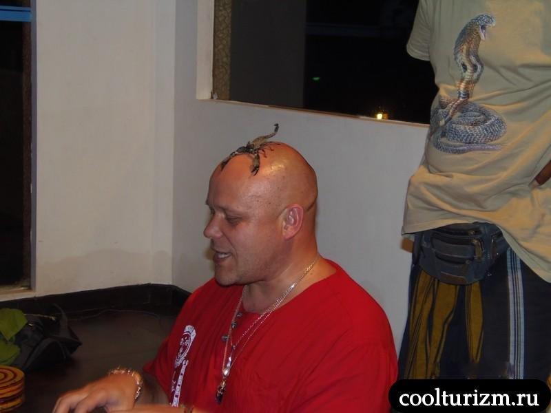Даршан со скорпионом на голове