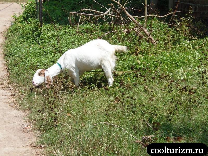 буйство природы на Шри-Ланке