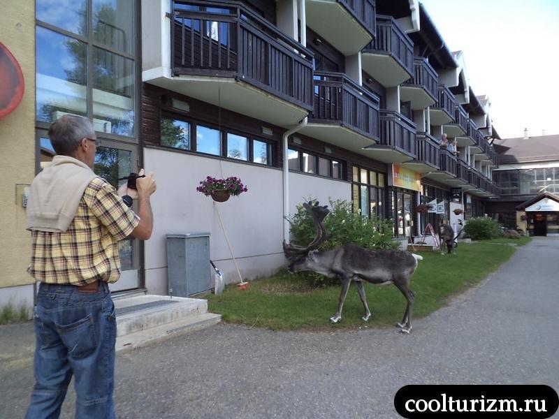 турист фоткает оленя
