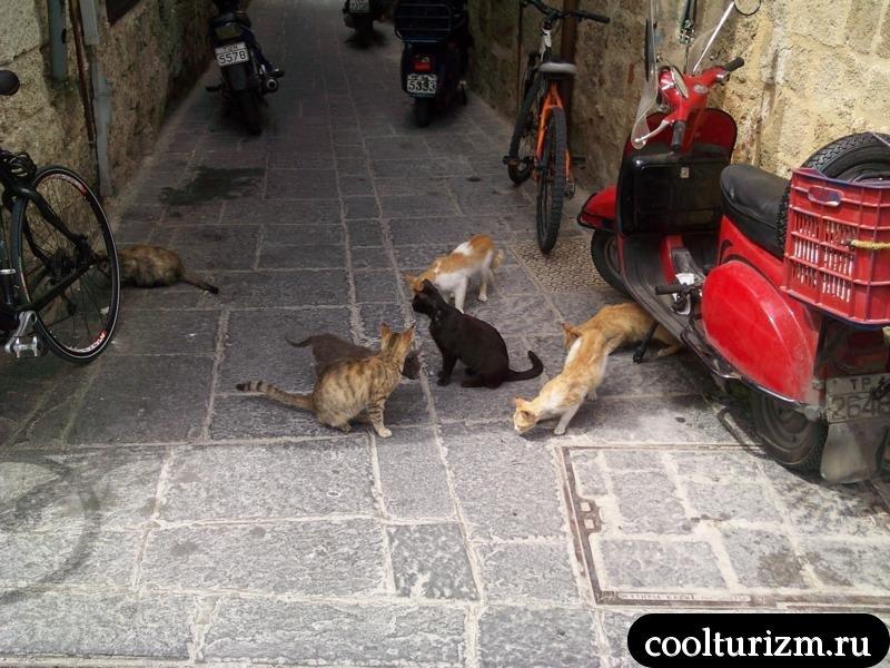 коты.родос.улицы