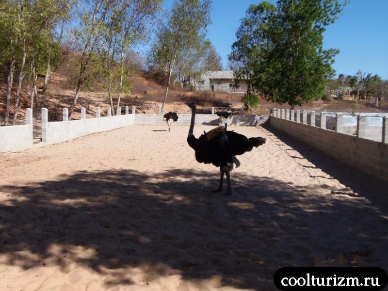 страусиная ферма в Муйне ручей фей