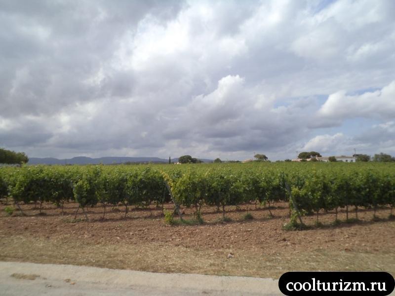 виноградники торрес