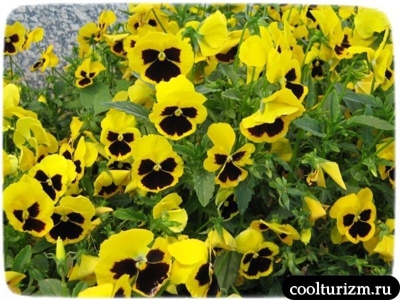 цветы в Иераполисе на выходе