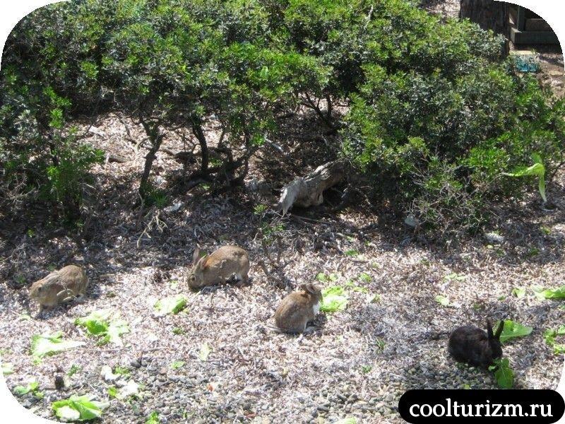 остров кроликов Турция