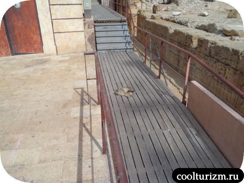 ленивые коты в Таррагоне