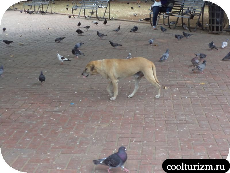собачка на площадт Санто-Доминго