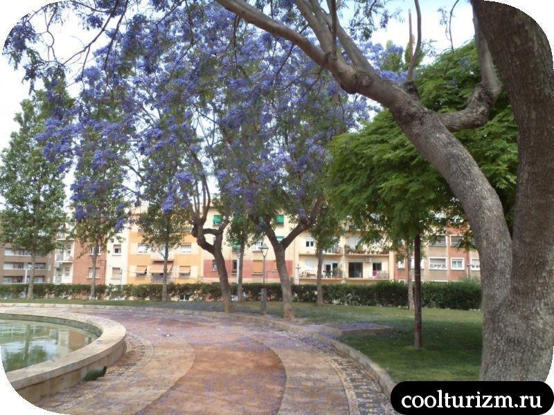 красивое фиолетовое дерево в таррагоне