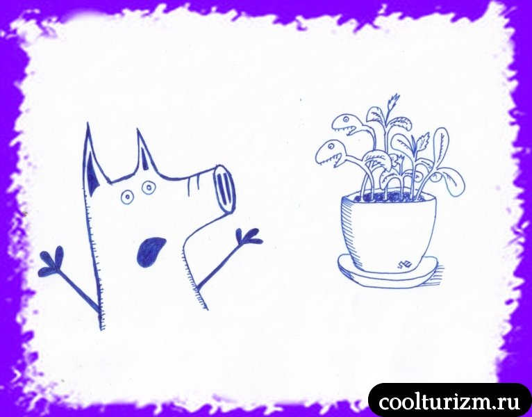 посадил свинсент тыкву
