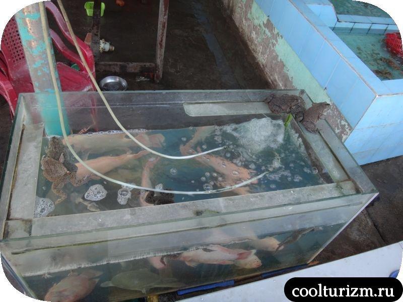 Муйне боке тазик с акулами