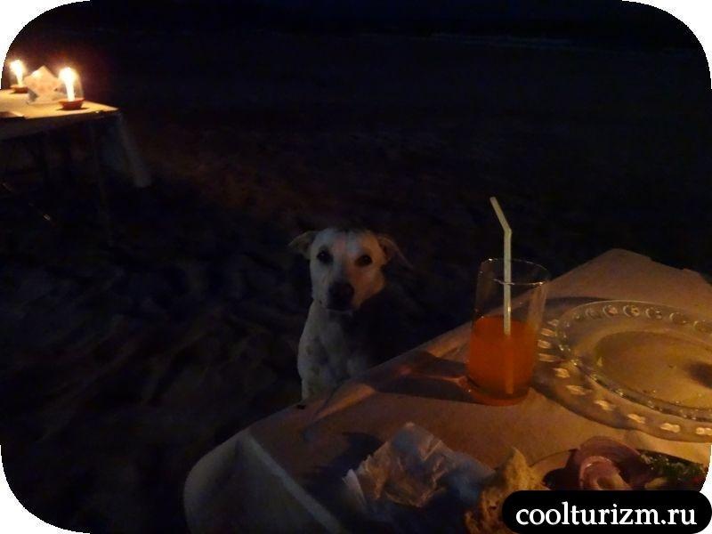 собака в Гоа