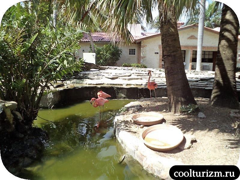 фламинго в отеле Доминиканы