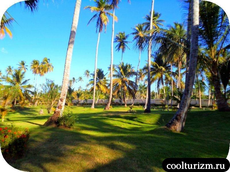 пальмы при оходе на пляж иыа барсело