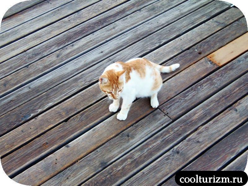 Рыжий кот Красная Башня