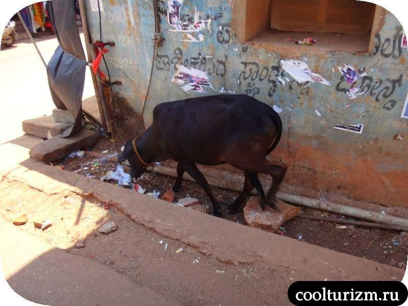 Карнатака, Гокарна Индия март