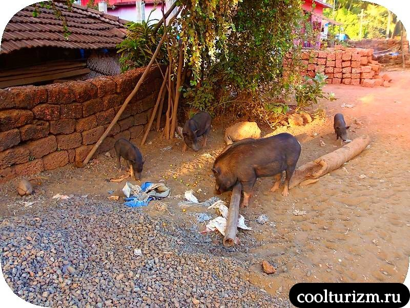 Гокарна, Карнатака, Гоа, Индия