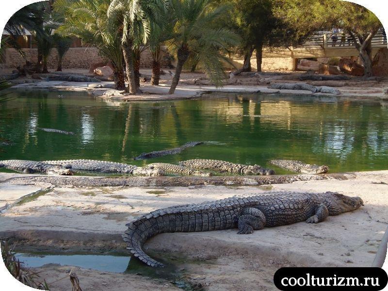 Джерба, Тунис ферма крокодилов