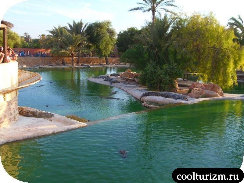 Джерба,Тунис. Экскурсия на крокодиловую ферму