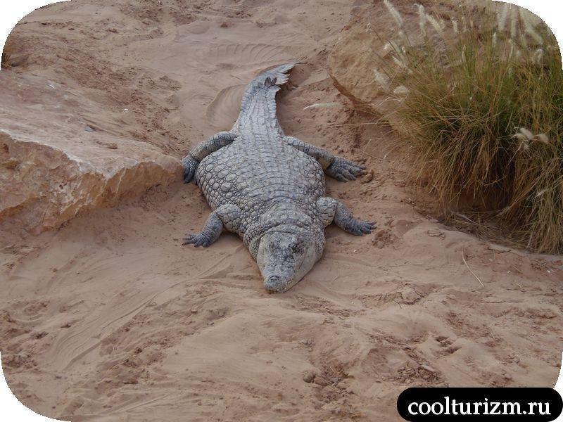Джерба, Тунис крокодил