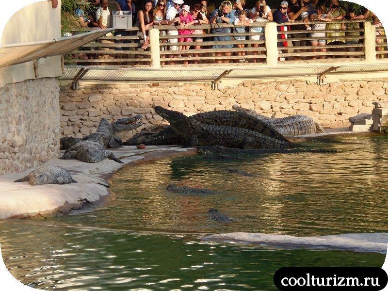 Джерба, Тунис кормежка крокодилов