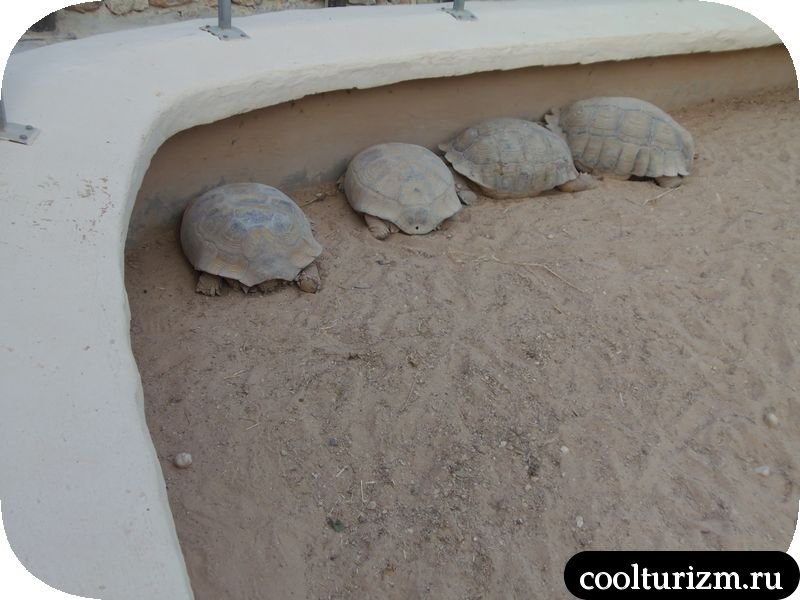 черепахи и крокодилы тунис