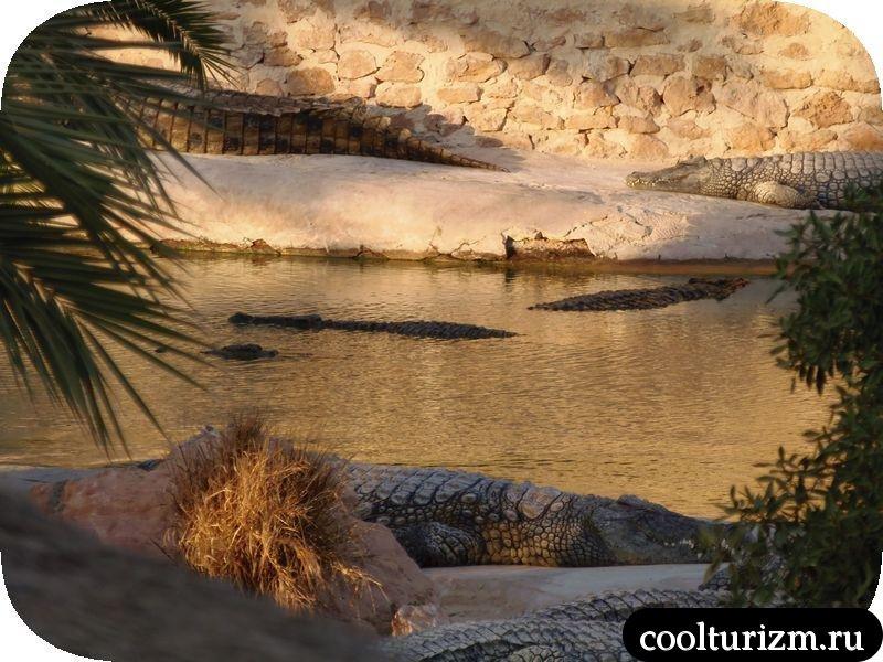 Джерба, Тунис нильские крокодилы