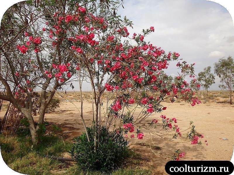 Озеро Шотт эль Джерид экскурсия в Сахару
