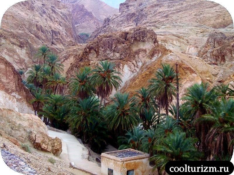 горная Шебика Тунис оазис