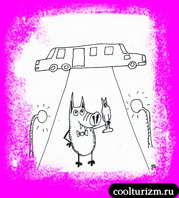Свинни-суперзвезда