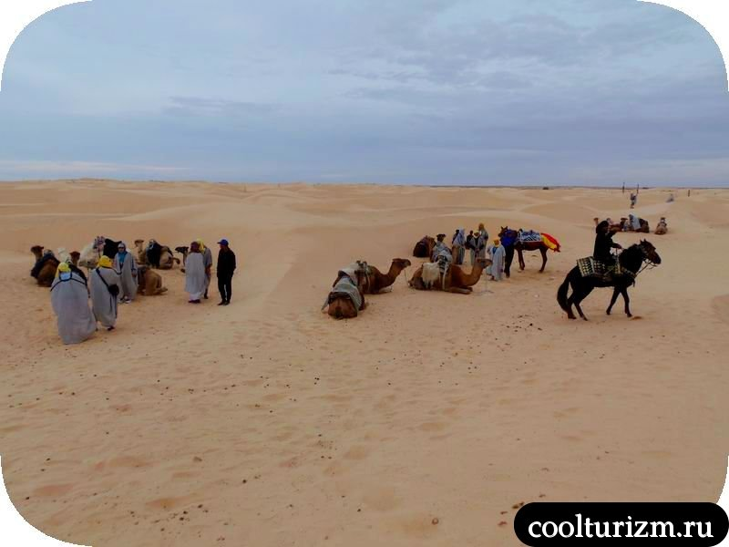как покататься на верблюде в Тунисе