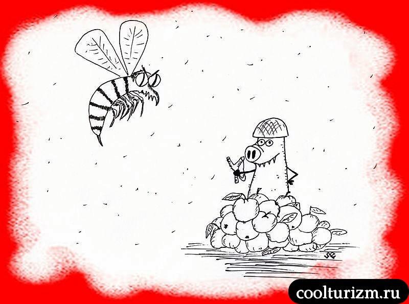 неравный бой с осами