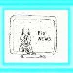 Свиные новости