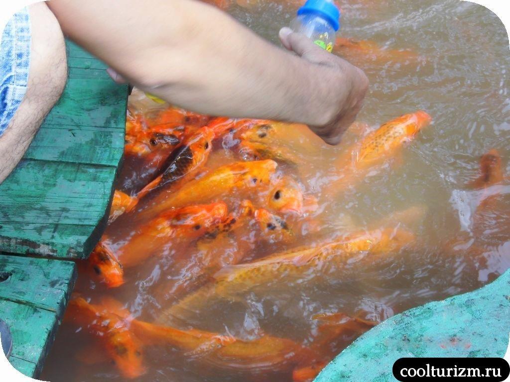 парк Янг Бей Вьетнам экскурсия