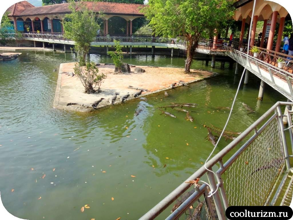 ферма крокодилов.Парк Янг Бей
