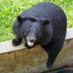 Янг Бей, Вьетнам. Зоопарк