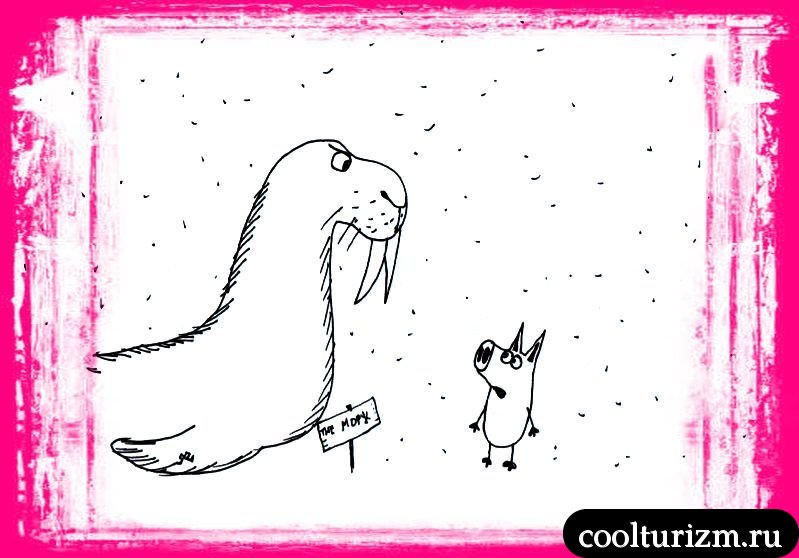 моржовые дела