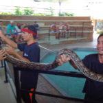 Шоу змей в Нячанге