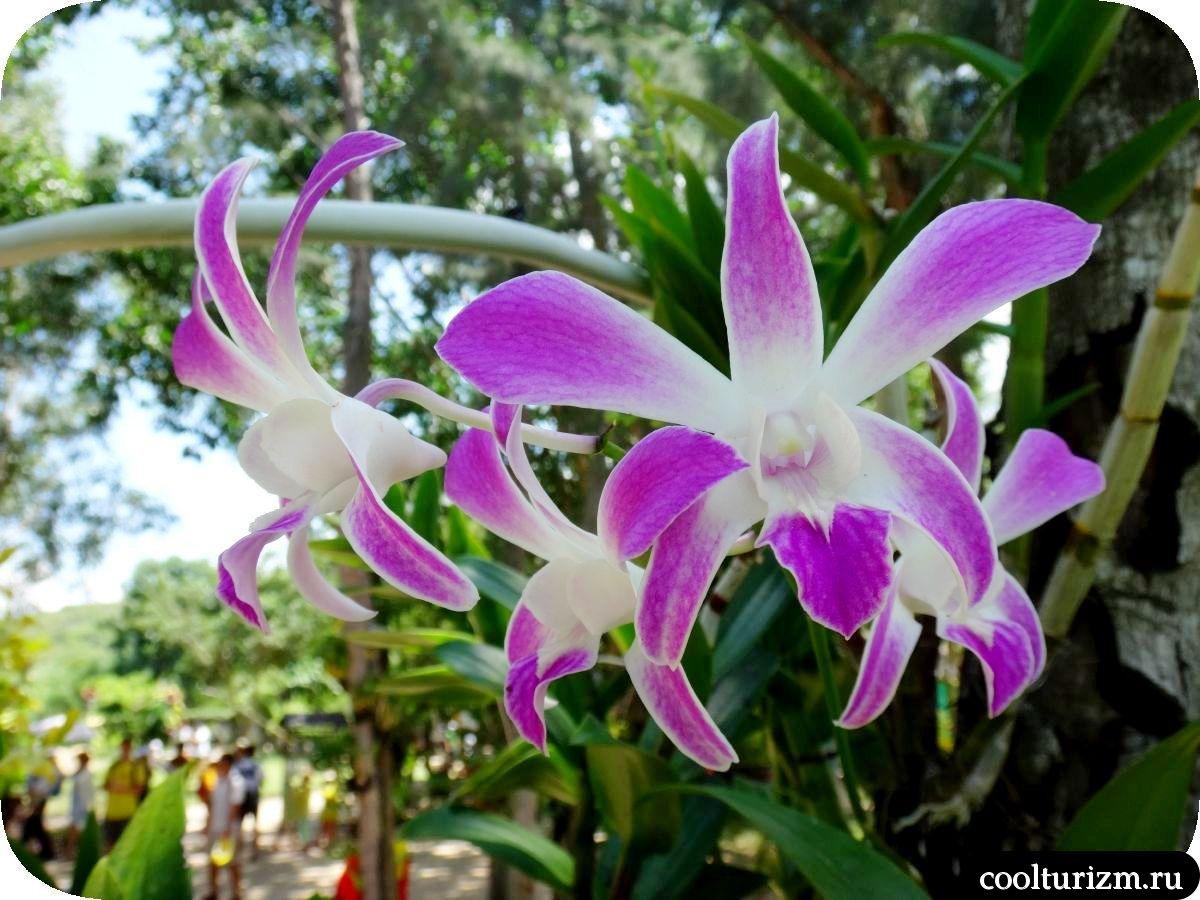 Остров орхидей Дао Хоа Лан