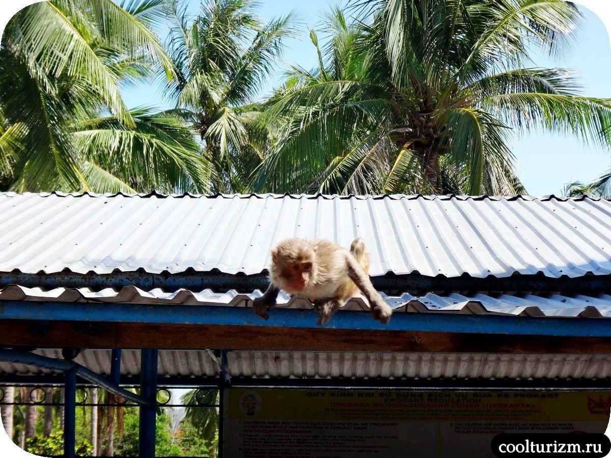 обезьяны в Нячанге